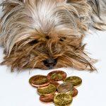 Cenová politika ve veterinární praxi