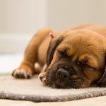 Vakcinační schémata aneb čím a kdy psa očkovat?
