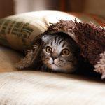 Obecné postřehy k péči o kočku