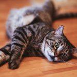 Kočka a rýma