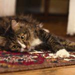 COVID-19 a domácí zvířata – koronaviry u společenských zvířat