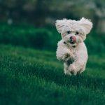 Když pohyb bolí II -klinické testování funkčních pamlsků Paw Treats