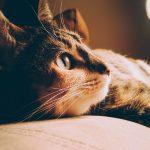 Kočka a silvestrovská noc