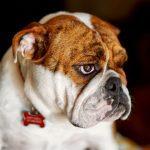 Problémy psího pozadí