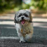 Stručný průvodce cestováním se psem