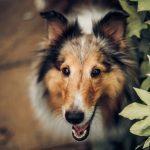 Průjem u psa – když to není dietní chyba