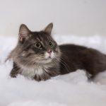 Kočka v zimě